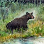 Your Bear
