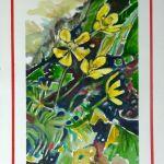 Mountain Ranunculus